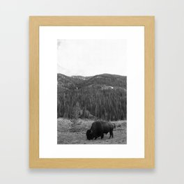 Bison in Yellowstone Framed Art Print