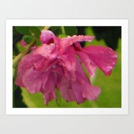 Raindrops Rose of Sharon Flower Art Print