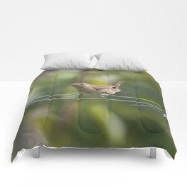 Mad Mama Wren Comforters