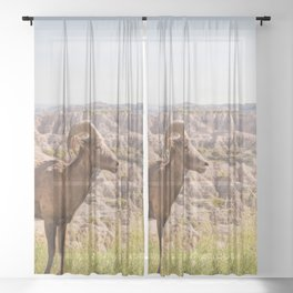 Stand Tall - Badlands Wildlife Photography Sheer Curtain