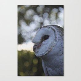 Australian Barn Owl Canvas Print