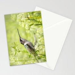 Hummingbird XIV Stationery Cards