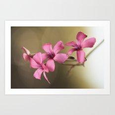 Dainty Pink Art Print