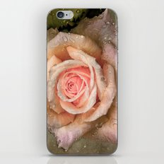 Vintage rose with water drops iPhone & iPod Skin