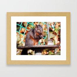 Black squirrel Framed Art Print