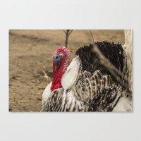turkey Canvas Prints featuring Turkey by Asya Bagdasaryan