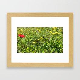 Sunny Grass Framed Art Print