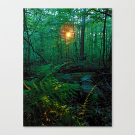 Sunkissed Forest Canvas Print