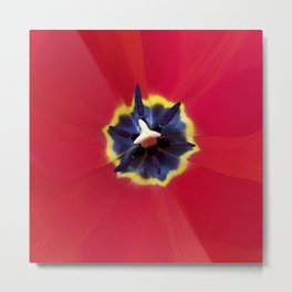Seeing red (at tulip time) Metal Print