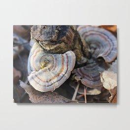 Mushrooms 1 Metal Print