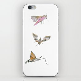 Biro and coloured pencil illustration of hawkmoths iPhone Skin