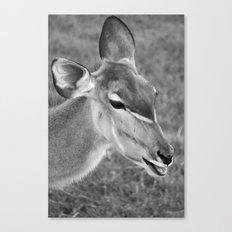 Zoo series no.2 Canvas Print