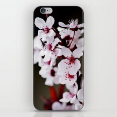 Signs of Spring 2 iPhone & iPod Skin