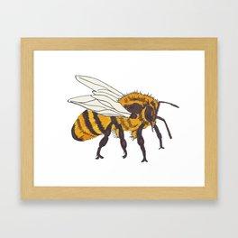 Honeybee Framed Art Print