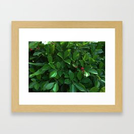 Green tropical foliage Framed Art Print