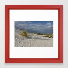Long Shadow of the Yucca Framed Art Print