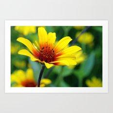 Prairie Flower II Art Print