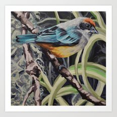 Scrub Tanager Art Print