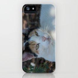 Cat Dubrovnik iPhone Case