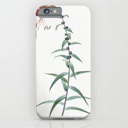 Horned tulip  from Les liliacees (1805) by Pierre Joseph Redoute (1759-1840) iPhone Case