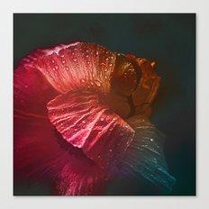 Dream Flower 4 Canvas Print