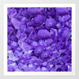 Amethyst  Hydrangea Flowers Garden Art Art Print
