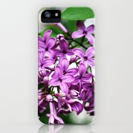 Lilac bushes bloom in the city park of Nalchik. iPhone Case
