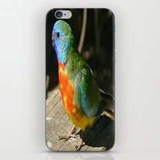 Scarlet-Chrested Parrot (Neophema splendida) iPhone & iPod Skin