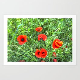 Summer Poppy Art Print