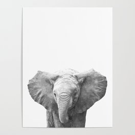Black and White Baby Elephant Poster