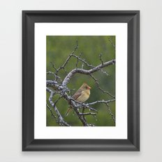 Pyrrhuloxia in the Rain Framed Art Print