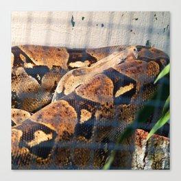 Sleeping Snake Canvas Print