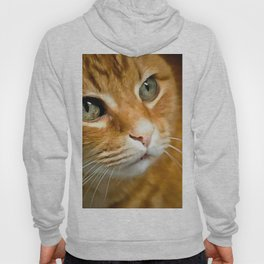 Adorable Ginger Tabby Cat Posing Hoody