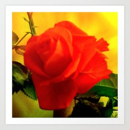 Rote Rose Art Print