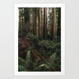 Redwood Forest Floor Art Print