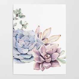Pristine Succulents Blue and Pink Poster