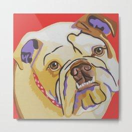 Daisy the Bull Dog Metal Print