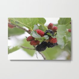 Mulberries Metal Print