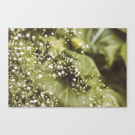 Baby Breath Canvas Print
