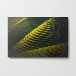 Rice Terraces Metal Print