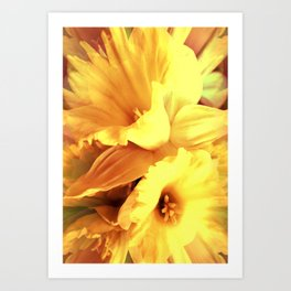 Daffodils In Spring Art Print