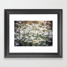 Wild Daisies 4134 Framed Art Print