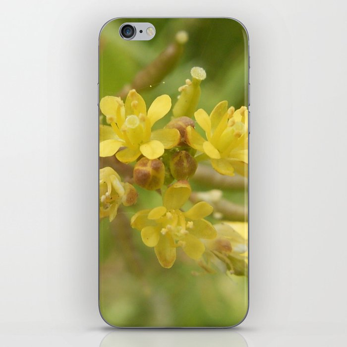 Rorippa Palustris Delicate Pale Mustard Flower iPhone Skin