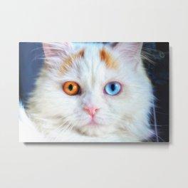Odd-Eyed White Persian Kitten Metal Print