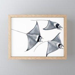 Devil fish Manta ray Mobula mobular Framed Mini Art Print