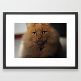 Rusty Bob Framed Art Print