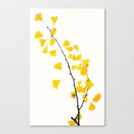 gingko biloba branch Canvas Print