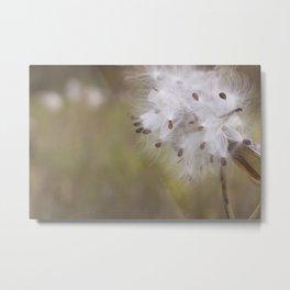 Milkweed Pod Metal Print