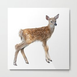 whitetail deer fawn watercolor, isolated on white background Metal Print