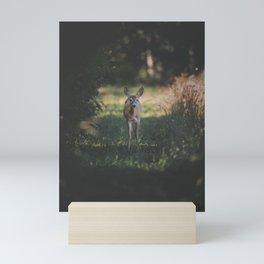 Backyard Encounter with a Deer Mini Art Print